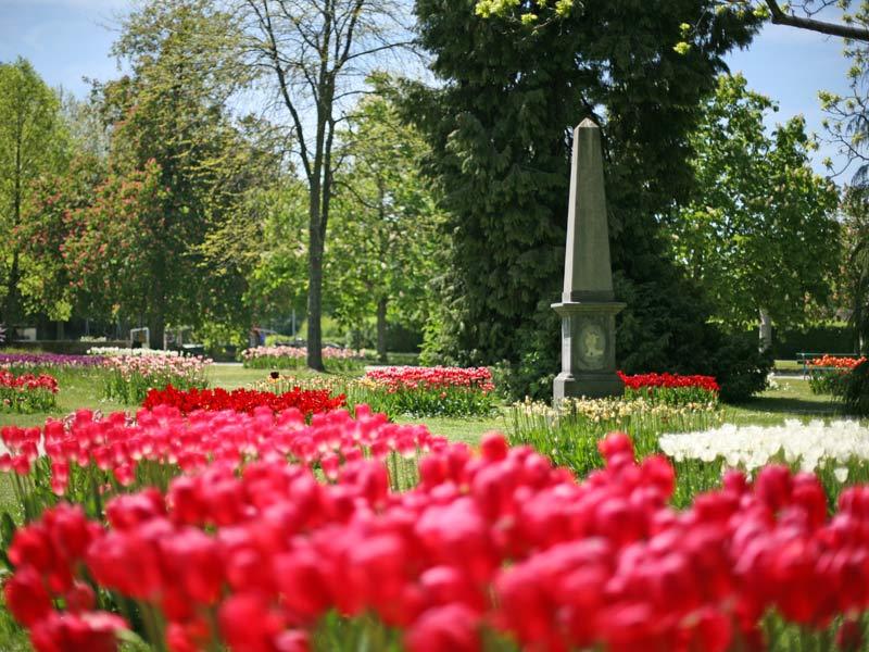 386900_tulipe4_web