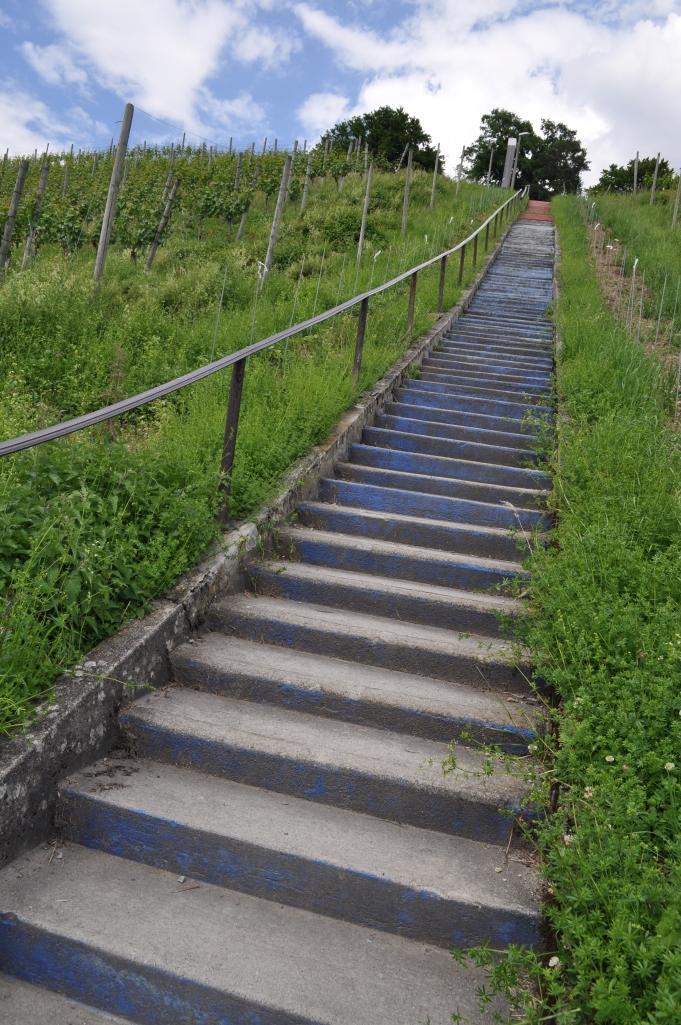 Viñedos y escalera