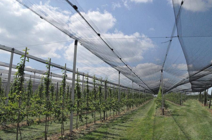 Campos de peras