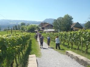 Los viñedos y muchos visitantes