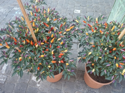 Chiles Numex Twilight